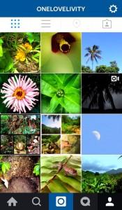 onelovelivity instagram