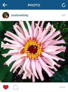 onelovelivity instagram zinnia